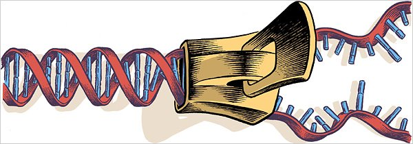 """crichton and shapir gene patenting and Crichton and shapir: gene patenting and embryonic stem cell research essay the stem cell research debate,"""" by robyn s shapiro, they discuss gene patenting, medicine, stem cell research , and the laws of bioethics."""
